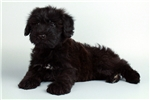 Picture of Kemba-WWW.VALUEPUP.COM (Q013807VAL)