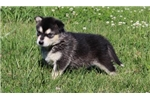 Picture of AKC Lucy