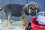 Picture of Clementine's puppy - Purple