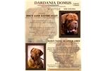 Picture of Dogue De Bordeaux puppies for sale