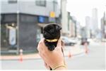 Picture of Micro Mini Pug