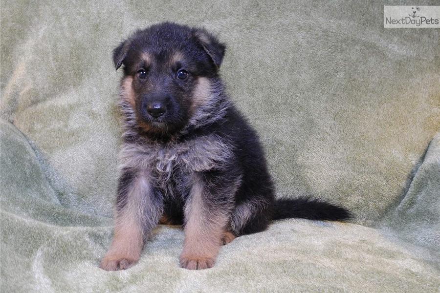 Dogs For Sale Little Rock Ar
