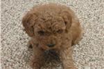 Picture of Bozo