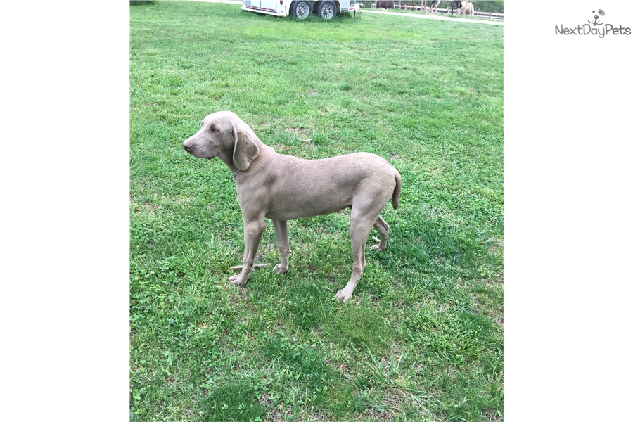 Trained Dogs For Sale Columbus Ohio