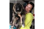 Picture of Herra puppy girl
