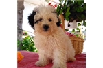 Picture of sweet puppy