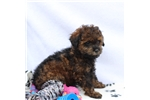 Picture of cute puppy!