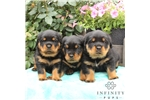 Picture of Amazing puppies!