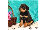 Picture of AKC well socialized !