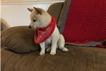 Picture of AKC-Kaven