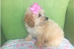 Picture of Noemi