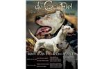 Picture of Dogo argentino puppy Ador de Caza Fiel