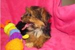 Picture of Sweet Baby Girl Tasha