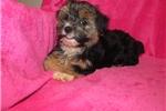 Picture of So Precious Tammi