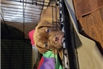 Picture of Savage seeks a home