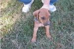 Picture of Junior