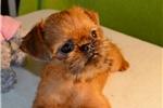 Picture of Sweet, miniature girl, Jennifer Lo