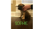 Picture of Sophie