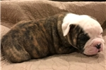 Picture of Dozer - He's the one you've been looking for!