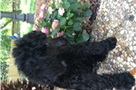 Picture of Royal Ebbie - Large stunning Black Female
