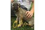 Picture of Orla