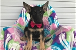 Picture of AKC Abby