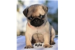Picture of Ayla
