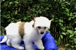 Picture of Little Corky