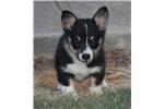 Picture of ACA Registered-Rosco