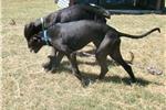 Picture of Greyhound Verde