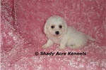 Picture of AKC Delilah--GA--We off to deliver