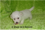 Picture of AKC Denny--GA--We off to deliver