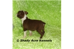Picture of Red--Odie-GA- We offer delivery