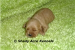 Picture of AKC Larry-GA- We offer delivery