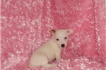 Picture of Shorty Sheron -GA- We offer delivery