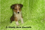 Picture of AKC Soapy- GA--Delivery Options Available