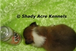 Picture of AKC Butler !! in Ga-Yes we offer delivery!