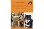 Picture of Candy Rock Alaskan Malamutes