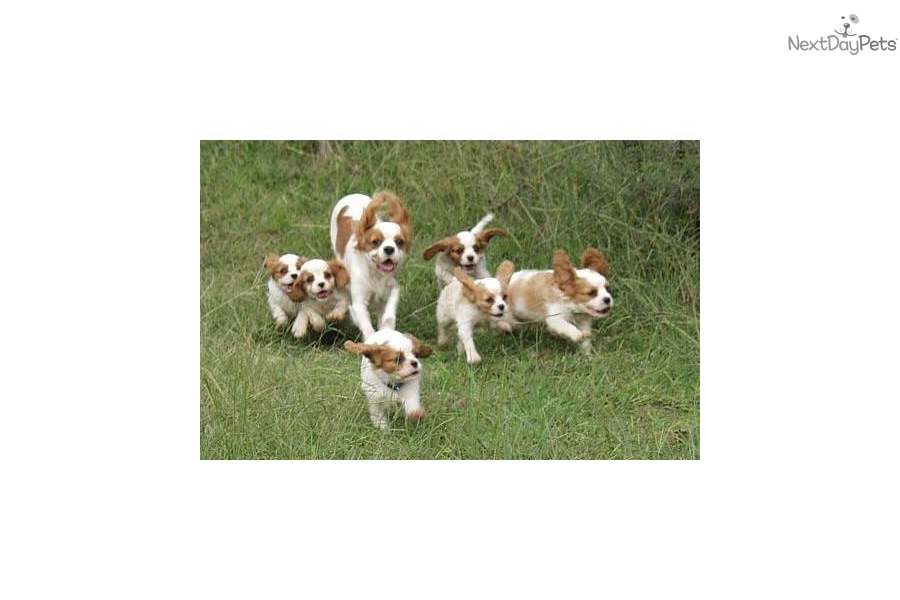 Small Dog Breeders Cincinnati