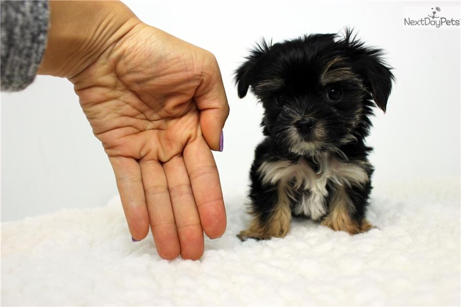 tiny love dog instructions