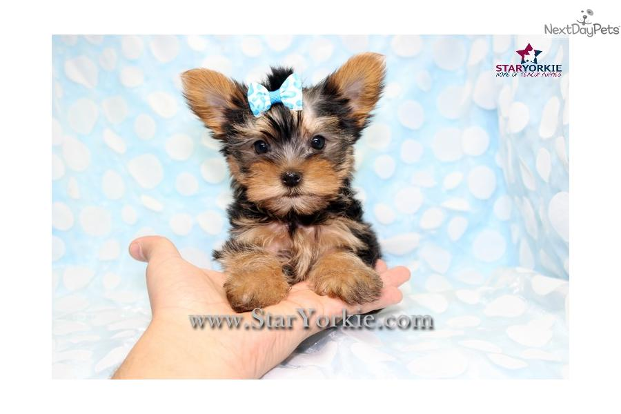 Small Dogs For Sale In Los Angeles Ca