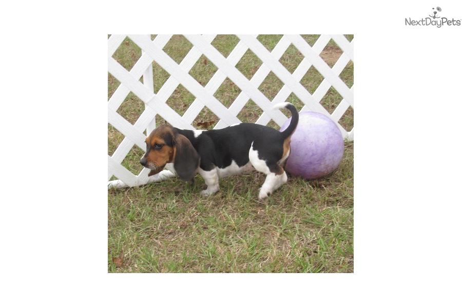 Dog Training Alton