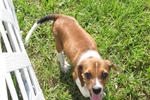 Picture of Charity - Adorable Brown Boggle Girl