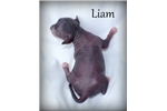 Picture of Liam - Hairless Male Chinese Crested