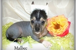 Picture of Malbec