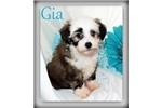 Picture of Gia - Powderpuff
