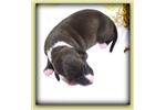 Picture of Sarissa, seal/wht female
