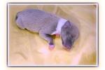 Picture of Kalani- very petite