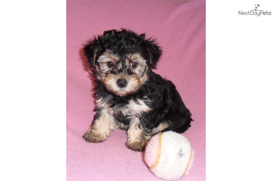 little live pets puppy instructions