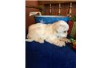Picture of Bennie